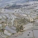 rizieres en terrasses