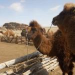 trip en chameaux